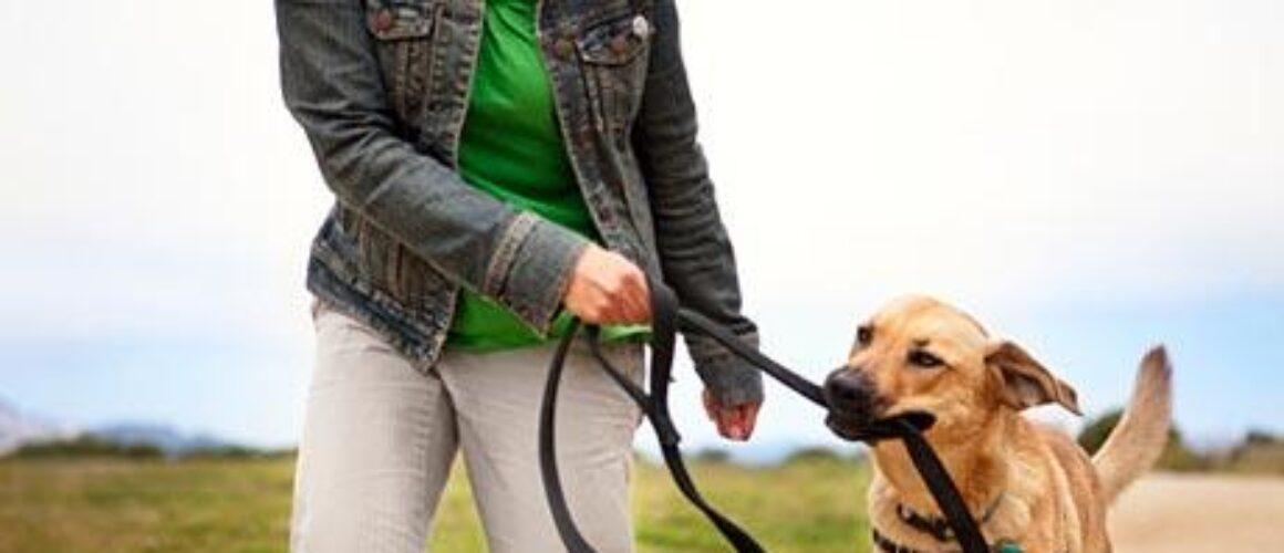 How to keep your Dog Fit and Healthy